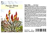 Seedeo Feuer-Aloe (Aloe ferox) 10 Samen