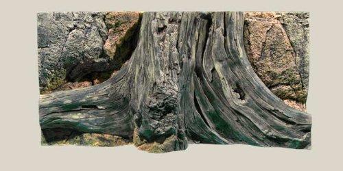 paroi-arriere-aquarium-amazonas-60-x-30-cm