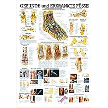 Der Fuß Lehrtafel Anatomie 100x70 cm medizinische Lehrmittel