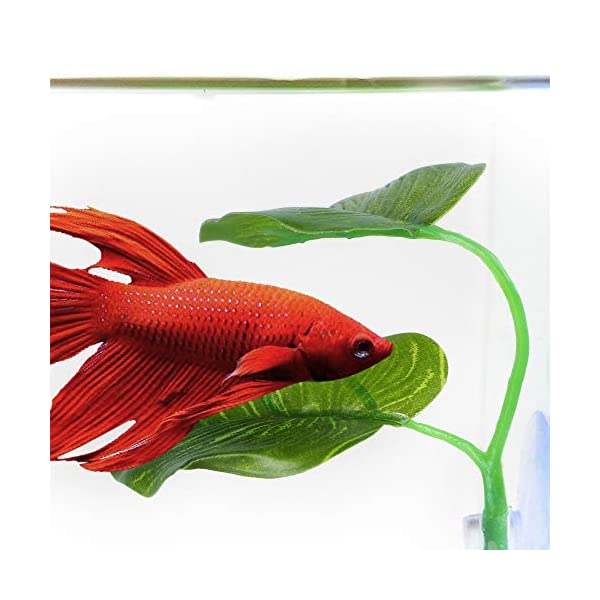 laamei 3 Pack Betta Hammock Plant Leaf Pad Fish Spawning Grounds Breeding Resting Hiding Bed Folating Aquarium Tank…