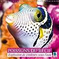 Explosion de couleurs sous la mer : poissons du récif : Poissons et coraux