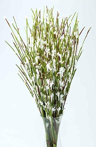 Ginster weiß 30 Stiele Kunstpflanzen Dekopflanzen Heimdeko Dekozweige Busch