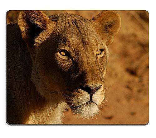 17P00142 Hochwertige Kreativität Mousepad Gaming Mouse Pad Lions Namibia Afrika