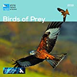 RSPB BIRDS OF PREY OFFICIAL 2018 CALENDAR SQUARE WALL NEW AND SEALED BY CAROUSEL