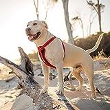 EzyDog Classic Hundegeschirr mit Brustplatte, Größe XS, rot