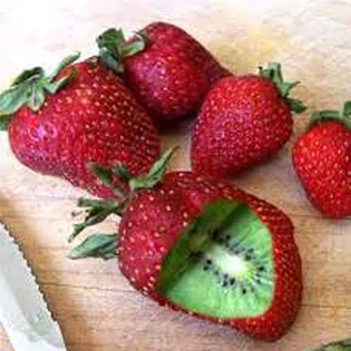 Yukio Samenhaus - Selten Kiwi (Actinidia chinensis) Samen Erdbeeren Form Obstsamen, Winterharte...