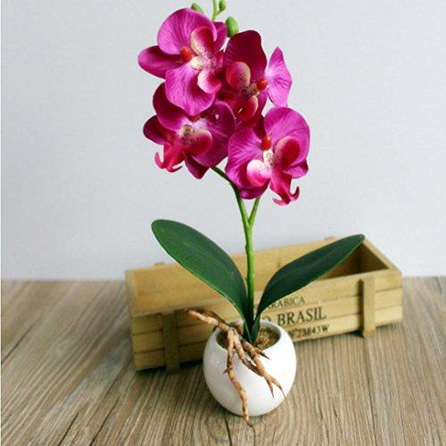 Longra Wohnaccessoires & Deko Kunstblumen Vier Schmetterling Orchidee fleischige Pflanze Bonsai kreative Blumenarrangements Zubehör (purple)