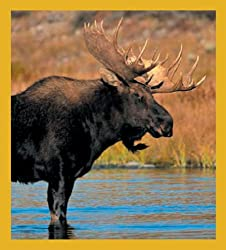 Gift Trenz Moose in Water Magnetic Bookmark