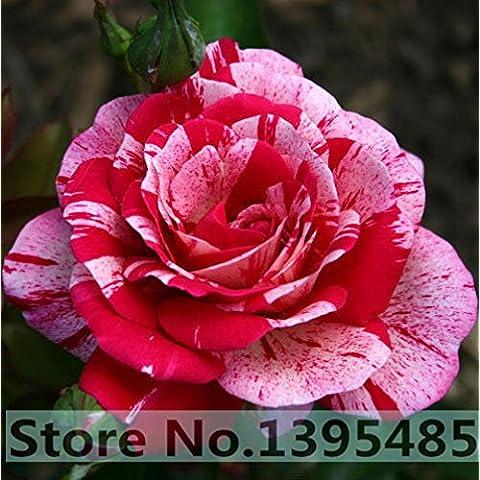 11.11 Promozione !!! 10 pc / sacchetto, semi Dracaena, semi in vaso, semi di fiore, bonsai pianta semi giardino, germinazione tasso del 95% + ,,