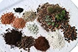 Mineralisch organische Kakteenerde Substrat Gärtner...