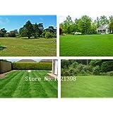 Turf Grass Seeds Golf Fußballfelder Villa Spezieller Grad Evergreen Rasen seeds500 Stück hochwertigen Grassamen