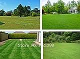 500pcs Korean lawn grass seeds (Zoysia Tenuifolia) Evergreen Lawn Seeds j693