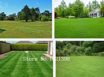 500pcs-graines-pelouse-dherbe-coreenne-zoysia-tenuifolia-graines-evergreen-gazon-de-j693