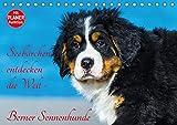 Seebärchen entdecken die Welt - Berner Sennenhunde (Tischkalender 2018 DIN A5 quer): Berner Sennenhunde-Welpen entdecken ihre Welt an der Ostseküste. (Geburtstagskalender, 14 Seiten ) (CALVENDO Tiere)
