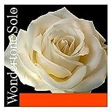 Pirastro 410021 Wondertone Solo Violin (E-ball, A-Synthetic) medium