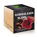 Feel Green Ecocube Schokoladenblume, Blüten Duften Nach Schokolade, Nachhaltige Geschenkidee (100% Eco Friendly), Grow Your Own/Anzuchtset, Pflanzen Im Holzwürfel, Made in Austria