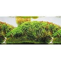 Pistachio Pet - Póster de doble cara para acuario, 45 x 100 cm