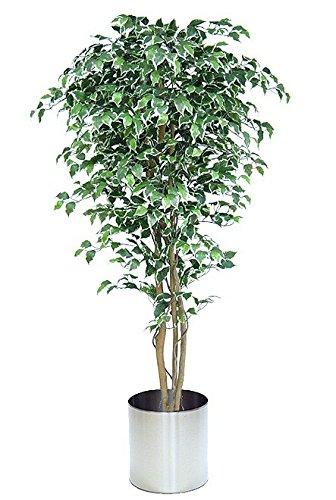 SALE: Exklusiver künstlicher Ficus Benjamini mit Naturstamm ca 180 -190 cm getopft!