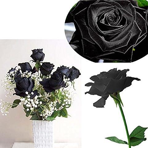 Bluelover 20 negro flor rosa Rose2 semillas
