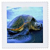 3dRose Florene Tiere–Hawaii Sea Turtle–Quilt
