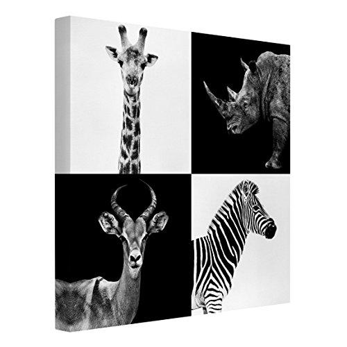Bilderwelten Leinwandbild Schwarz-Weiß - Safari Quartett -