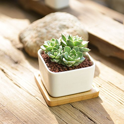 sun-e-modern-white-ceramic-succulent-planter-pots-mini-flower-plant-containers-with-bamboo-saucers-s