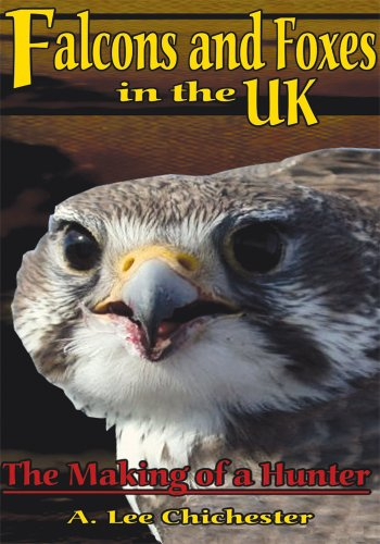 Falcons and Foxes in the U.K.: The Making of a Hunter