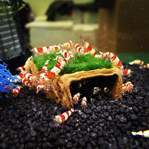Garnelio - Nano-Bungalow bewachsen - Moosauswahl - Aquarium Deko, Moos:Riccia - Teichlebermoos -