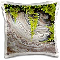 Danita Delimont - Fungi - WA, Tiger Mountain Forest, Shelf fungus, moss - US48 JWI2034 - Jamie and Judy Wild - 16x16 inch Pillow Case (pc_96123_1)