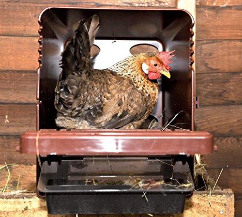 Legenest ChickBox - 2