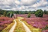 druck-shop24 Wunschmotiv: Path Through Lüneburg Heath,