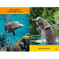 Il-mio-amico-delfino-Primi-passi-Ediz-illustrata