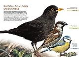 Gartenvögel lebensgroß - 2