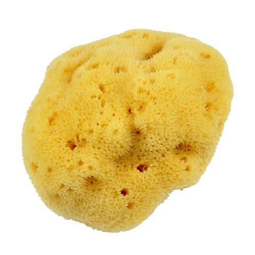Croll & Denecke L090 Éponge naturelle Levantine de la mer Méditerranée à pores fins pour le soin du visage 9 cm