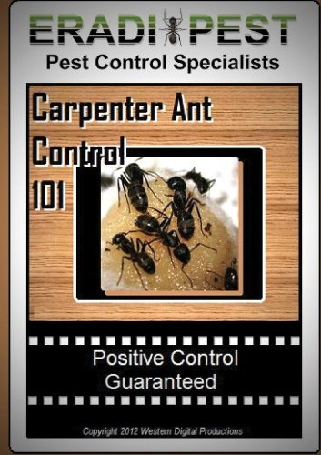 carpenter-ant-pest-control-101