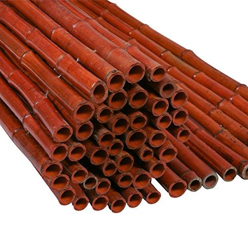 Canisse Epaisse Bambou Rouge - 1.8m H x 1.9m L