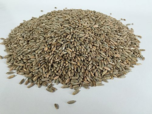 Demeter Bio Roggenkörner 1 kg keimfähig unbehandelt zum selber vermahlen oder zur Sprossenzucht