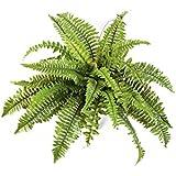 Floral Concept Greens&Foliages - Arbusto Helecho, 50 x 50 x 50 cm, color verde natural