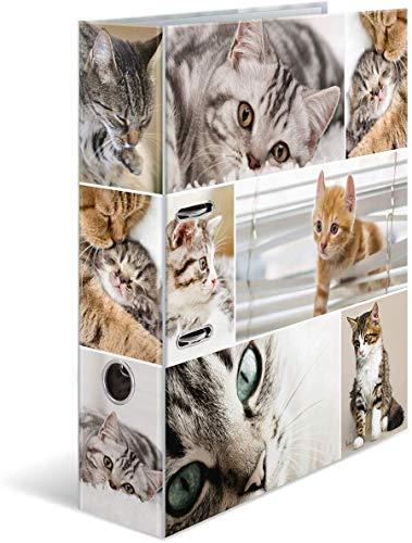 HERMA 7166 Motiv-Ordner DIN A4 Animals Katzen, 7 cm breit aus stabilem Karton mit Tier-Motiv Innendruck, Ringordner, Aktenordner, Briefordner, 1 Ordner