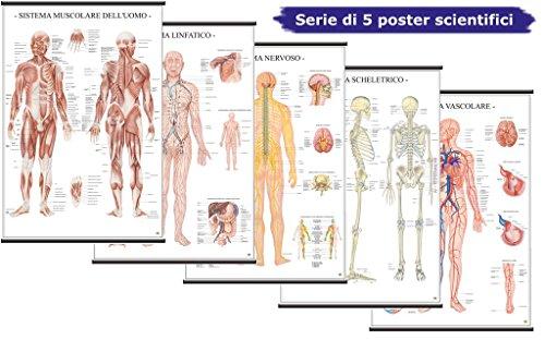 Sistemi del corpo umano [Serie di 5 Poster Scientifici 67x100 cm] [1x: Sistema Linfatico, Sistema Muscolare, Sistema Nervoso, Sistema Scheletrico, Sistema Vascolare] Belletti