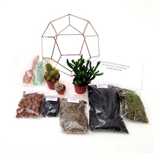 Dodecaedro geometrico vetro terrario con pianta/s, cinque sacchetti di diverse