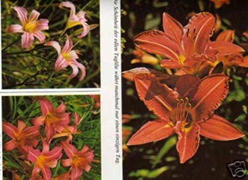 15 Miniteichpfl + Seerose Jetzt Kaufen im Frühjahr ab April wird geliefert. 2,64 € pro Pflanze
