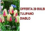 OFFERTA 20 BULBI AUTUNNALI TULIPANO GREIGII DIABLO BULBS BULBES
