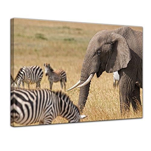 Wandbild - Afrika (Zebra und Elefant) - Bild auf Leinwand - 70 x 50 cm - Leinwandbilder - Bilder als Leinwanddruck - Tierwelten - Natur -Afrika - afrikanische Fauna