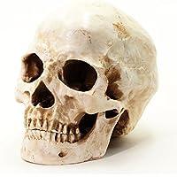 S24.5234 Menschlicher Schädel, antikes Finish, lebensgroß, weiss
