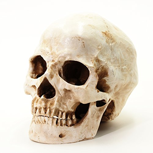 r Schädel, antikes Finish, lebensgroß, weiss (Lebensgroße Halloween Requisiten)