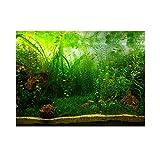 Aquarium Fond Poster PVC décor adhésif Papier Vert d'eau Herbe Aquatique Style comme de Vrais 61 * 41cm