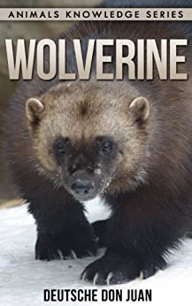 wolverine beautiful pictures interesting facts children book about wolverine animals. Black Bedroom Furniture Sets. Home Design Ideas