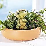 Frank Flechtwaren 'Vaso per piante tartaruga–Vaso per fiori Vaso Decorativo Vaso da fiori in vaso