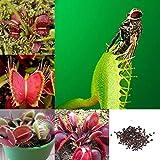 Edited Venusfliegenfalle ca. 50 Samen Fleischfressende Pflanze, Fliegenfalle, Gastgeschenke, Geschenk für Frauen und Männer, Geburtstagsgeschenk für Männer (Dunkelblau)